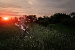 A man mows the grass in the garden with a trimmer at dawn royalty free stock photo