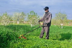 Man mows grass by manual lawnmower Royalty Free Stock Photography