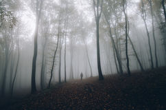 Man in mysterious fantasy forest with fog in autumn Royalty Free Stock Photography