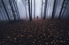 Man in mysterious forest with fog on Hallooween Royalty Free Stock Photos