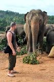 Man nära till elefanten Arkivbild