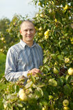 Man near apples trees Stock Photo