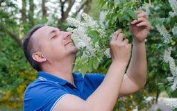 A man near bird-cherry. The man enthusiastically sniffing the smell of bird-cherry Stock Photos