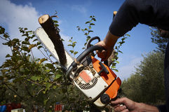 Man without the necessary protection, cuts tree with chainsaw Royalty Free Stock Photos