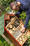 Man next to an insect house. Man fills an insect house with wood pieces in his garden Stock Photos