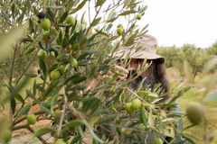 Man observing olives on plant Royalty Free Stock Images