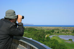 Man observing wildlife. Man looking through binoculars at a natural wetland area near the sea (Aiguamolls Emporda, Spain Stock Images