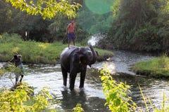 Man och djur förlaga tjänare Elefant med mannen royaltyfri fotografi