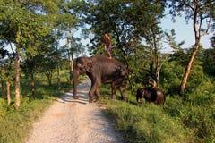 Man och djur förlaga tjänare Elefant med mannen royaltyfria foton