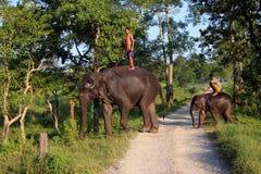 Man och djur förlaga tjänare Elefant med mannen royaltyfri foto