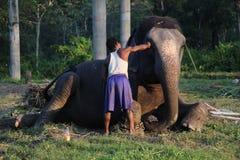 Man och djur förlaga tjänare Elefant med mannen arkivfoto