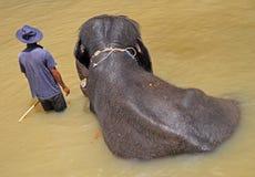 Man och elefant i Kuala Gandah Royaltyfri Foto