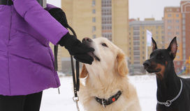 Man och hundkapplöpning Royaltyfri Foto
