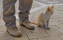 Man- och kattkamratskap royaltyfri fotografi