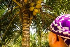 man och kokosnöt Fotografering för Bildbyråer