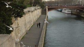 Man och kvinna som går nära floden, många seagulls som över flyger - vatten i långsam-mo stock video
