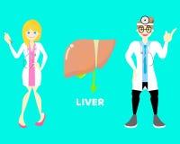 Man och kvinnlig doktor med lever, för anatomikroppsdel för inre organ nervsystem royaltyfri illustrationer