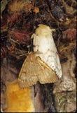 Man och kvinnliga zigenska malar Royaltyfri Bild