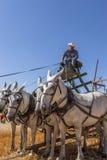 Man och lag av hästar Arkivfoton