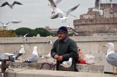 Man och seagulls Royaltyfria Foton