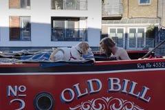 Man och stor hund angående de näsa till näsan fotografering för bildbyråer