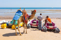 Man offering camel ride on the beach of Hurghada Stock Image