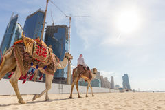 Man offering camel ride on Jumeirah beach, Dubai, United Arab Emirates. Stock Images