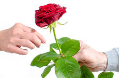 Man offering a red rose to a woman Royalty Free Stock Photos
