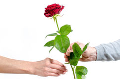 Man offering a red rose to a woman Stock Photos