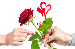 Man offering a red rose to a woman Royalty Free Stock Images