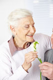 Man offering senior woman Freesia Royalty Free Stock Images