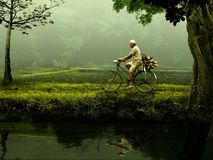 Man, Old, Bike, Nature, Green Royalty Free Stock Photo