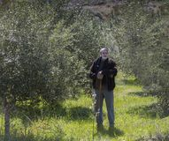 Man In Olive Grove. stock photography