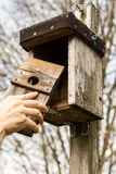 Man is opening a birdhouse Royalty Free Stock Photo