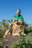 The man opens the jaws of a lion in safari park Taigan, Crimea, Royalty Free Stock Photos