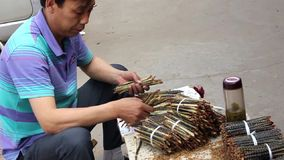 Man organizing centipedes in a medicinal street market in Beijing, China stock video