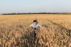 Man på vetefält Royaltyfria Bilder