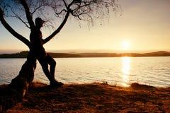 Man på träd Konturn av den ensamma mannen sitter på filial av björkträdet på solnedgången på shoreline Arkivbilder