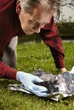 Man found falled meteorite on outdoor location. Man packing meteorite found on spring meadow to aluminium foil Royalty Free Stock Photography