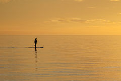 Paddleboard. Man on paddleboard at sunset stock images