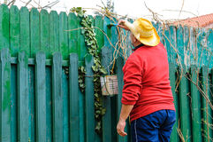 Man painting fence in garden Royalty Free Stock Image
