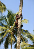 The man on a palm tree Stock Photography