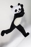 Man in panda costume. Over white background Royalty Free Stock Photos
