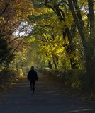 Man walking in the park alley stock photography