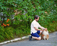 Man in the park with his pet Sheltie dog breed. Stock Photo