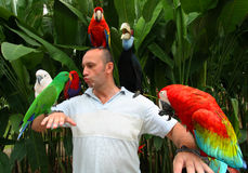 Man and parrots Royalty Free Stock Image