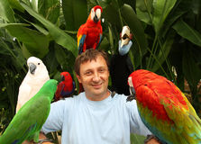 Man and parrots stock photos