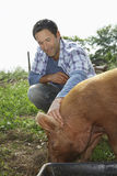 Man Patting Pig In Sty. Smiling young man patting pig in sty against the sky Royalty Free Stock Images