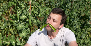 Man with a Pea Pod Like e Mustaches Royalty Free Stock Photo