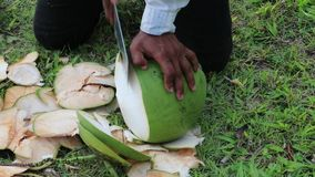 Man peels a big green coconut stock footage